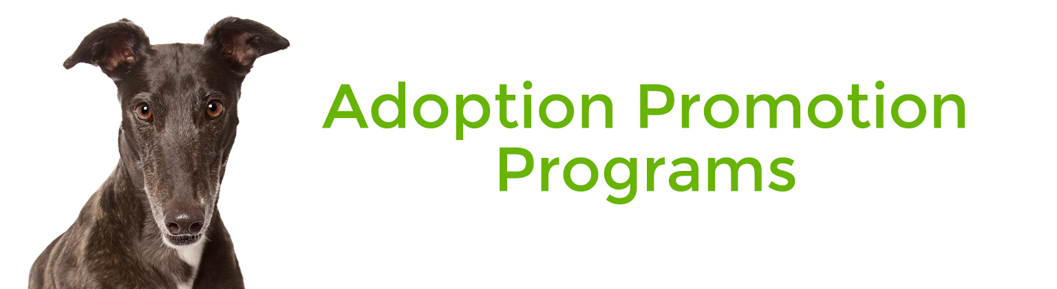 Pet Adoption Promotion